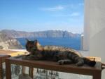 曬太陽的小貓