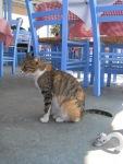 餐廳的小貓
