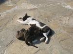 貓媽媽在餵小貓
