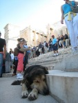 Acropolis 的衛狗
