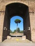 Rome 常見的樹