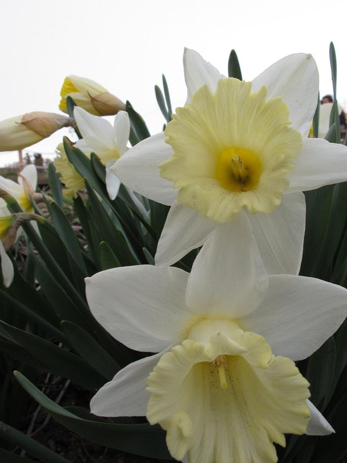 附近的小黃花