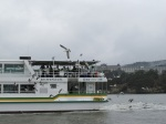 這船比較受海鷗歡迎(我是看到它才想起我們也有買蝦條)