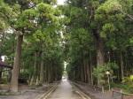 瑞嚴寺外兩旁的高樹(很莊嚴的感覺)