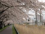 在日本,坐火車都可以賞櫻